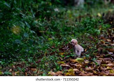 a little macaque look like Gollum