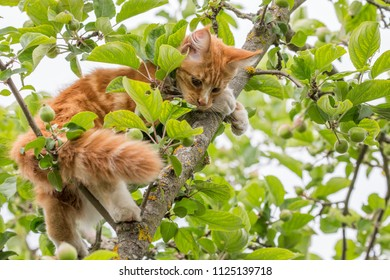 Little maine coon on the tree