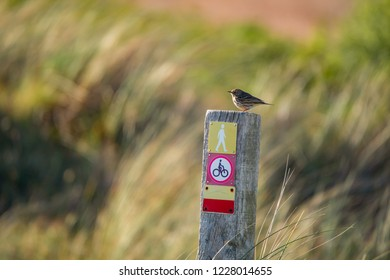 little meadow pipit sitting on a wooden pile with icons on a colorful blurry background - Texel Netherlands Holland