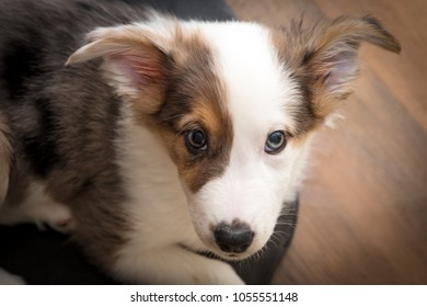 Little mix-breed Puppy Dog looking an the viewer, Portrait of a dog with patchy color