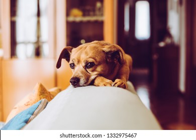 little mongrel dog pet - sensory connection with animals concept - trendy style image