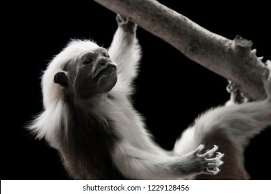A little monkey hanging from a branch