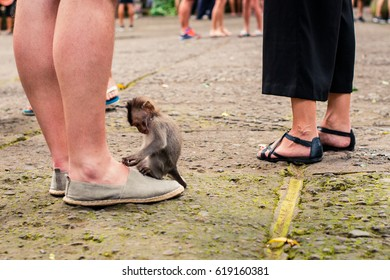 Little monkey on human feet
