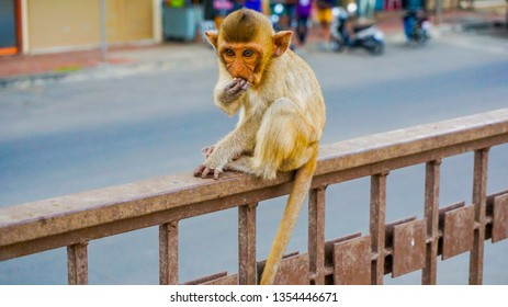 A little monkey is sitting near the ancient pagoda in lopburi thailand.