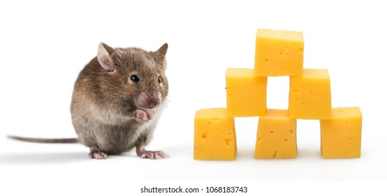 Little mouse and cheese