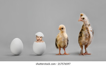 little nestling chicks  and white egg on grey background