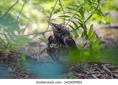 Little nestling walks in the woods on a sunny day