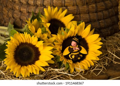 Little newborn baby in bee outfit sleeping in the heart of a sunflower against a backdrop of an old beehive