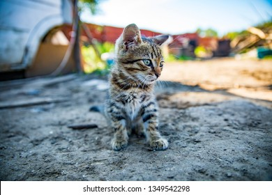 little nice cat on the ground monsieur