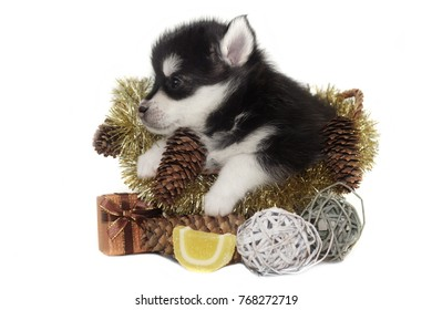 Designer Dog Images, Stock Photos & Vectors   Shutterstock