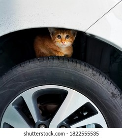 little orange cat on tyre of car that parking and cat is looking to camera.