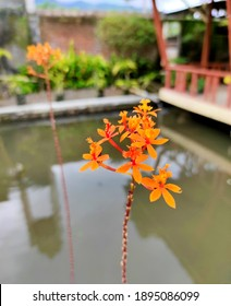 A Little Orange Flower beside Fishpond