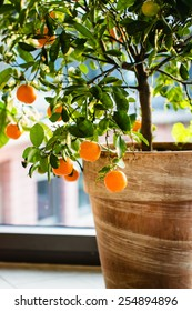 Little orange tree in terracotta pot. Selective focus.