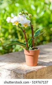 Little orchid on a brick patio with green background