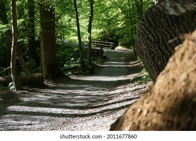 A little path in the woods with a treestump on the front