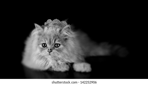 A little persian kitten cat, posing with a crown of the king on black background and in black and white. Concept of lion king.