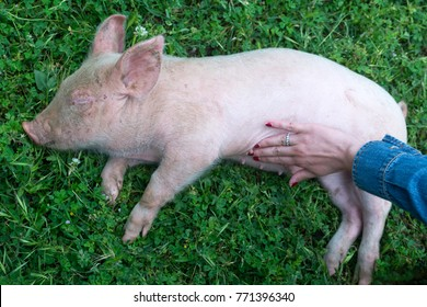 Little pig sleeping and have cuddle