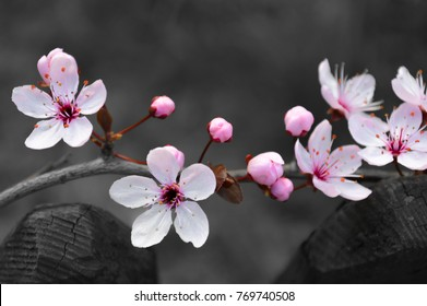 little pink white blossoms