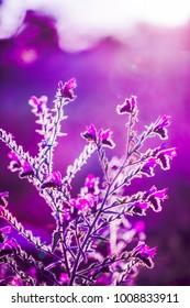 Little pink wild flowers.