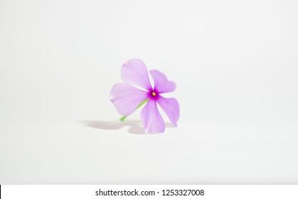 little pinky flower