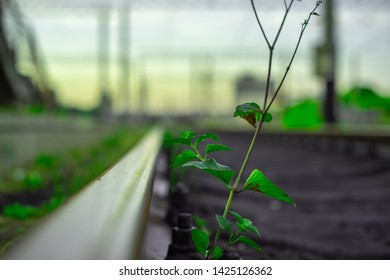 little plant with green leaves on empty train station