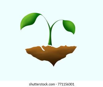 Little Plant Growing