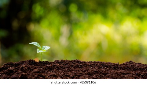 little plant growing on organic soil with green background