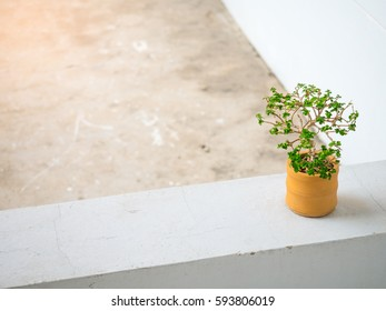 Little plant in orange earthenware pot on concrete floor. Space for text and design.