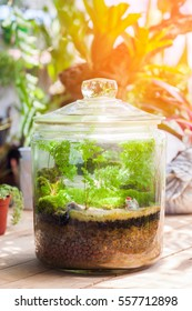 little plants in a jar with self ecosystem, terrarium