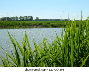 Little pond on spring sunny day in the countryside in Masuria, Poland