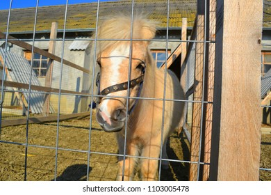 Little pony at the zoo. Cute hobbyhorse behind the fence