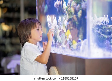 Little preschool child watching fish tank, aquarium with colorful fishes and corals