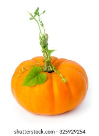 Little pumpkin with vines and leaves
