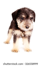 little puppies isolated on a white background