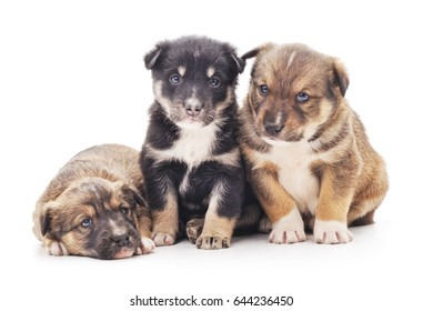 Little puppies isolated on a white background.