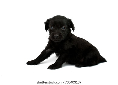 little puppies isolated on white background