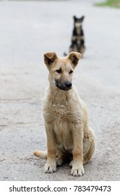Little puppies of out-of-town stray dogs on the street