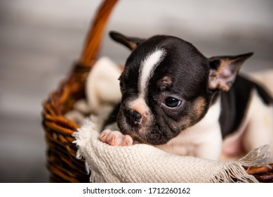 little puppies in a photo studio