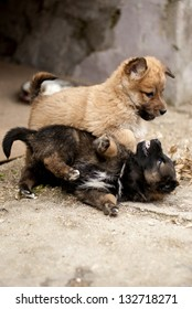 little puppies playing
