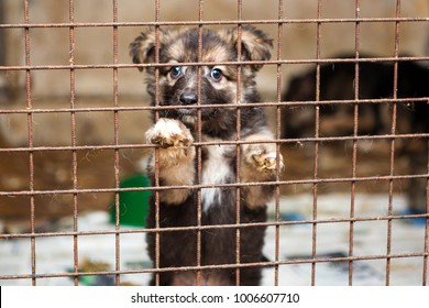 Little puppy in a cage of a shelter waiting for a new owner