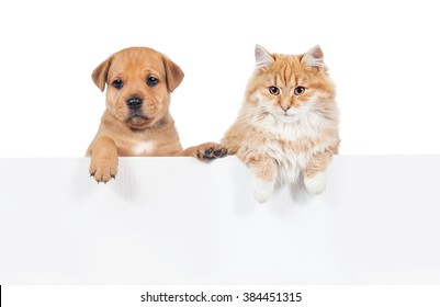 Little puppy with a cat hanging their paws over a white banner