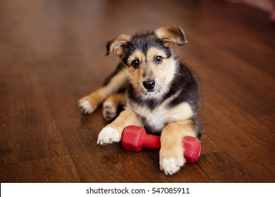 little puppy holding  a dumbbell