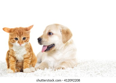 little puppy and kitten