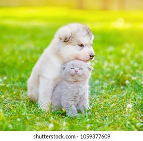 Little puppy with kitten on summer green grass