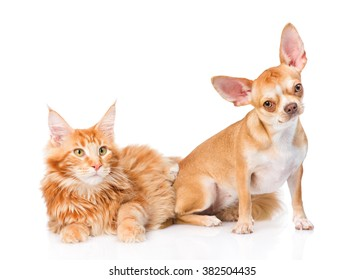 Little puppy and maine coon cat together. isolated on white background