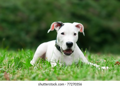 little puppy outside in the grass