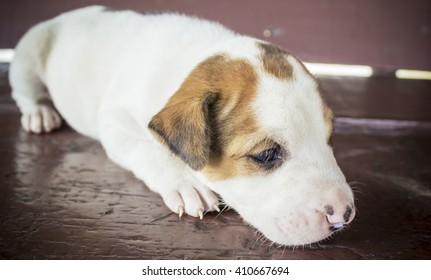 The little puppy sleep on wooden
