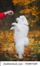 little puppy stands on his hind legs and reaches for man hand