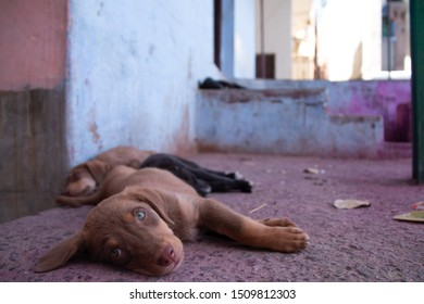 Little puppy in the street of india after the Holy festival with lots of colors on the ground.