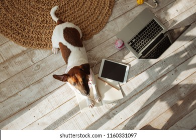 Little puppy. Top view of cute dog playing on the floor at home